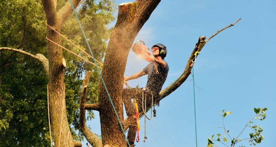 Surety Life Arborist Tree Lopper Income Protection