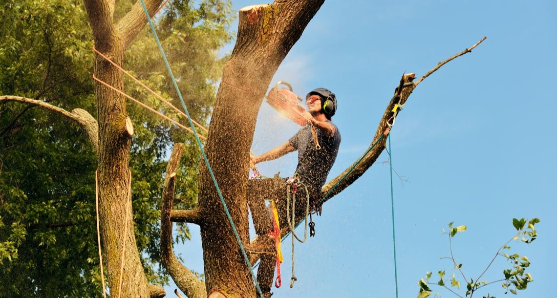 Surety Life Arborist Tree Lopper Income Protection